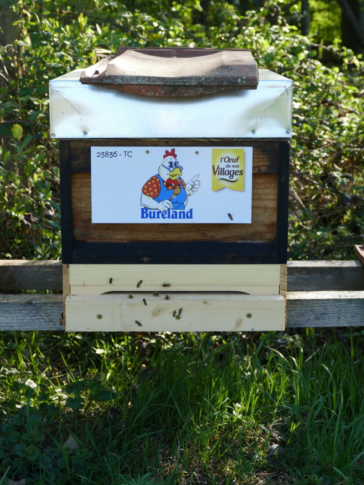 Une de nos ruches en Alsace