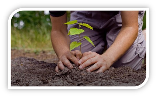 « 10 likes pour 1 arbre » : bientôt 2 000 arbres replantés !